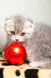Kitten  with Christmas decoration Stock Image