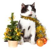 Kitten and christmas decorations Royalty Free Stock Photo