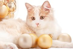Kitten with Christmas Decorations royalty free stock images