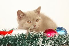 Kitten with Christmas Decorations Royalty Free Stock Image