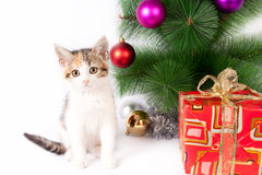 Kitten and Christmas decorations royalty free stock images