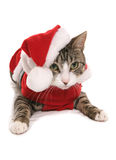 Kitten in christmas fancy dress costume Royalty Free Stock Photos