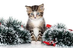 Kitten Christmas garland Stock Photo