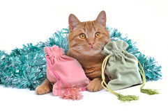 Kitten with Christmas Gifts Royalty Free Stock Photography