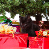 Kitten between christmas gifts Stock Photo
