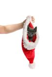Kitten in Christmas hat Royalty Free Stock Photos