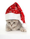 Kitten in Christmas hat. Royalty Free Stock Photography