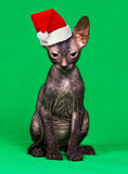 Kitten in a Christmas hat. On a green background Royalty Free Stock Images