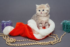 Kitten  and Christmas hat Stock Image