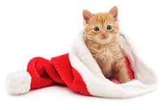 Kitten in the Christmas hat. Royalty Free Stock Photos