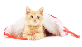 Kitten in the Christmas hat. Royalty Free Stock Photo