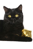 Kitten with Christmas ornaments. Royalty Free Stock Photos