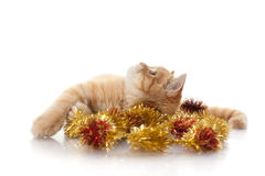 Kitten and christmas ornaments Royalty Free Stock Images