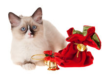 Kitten with christmas ornaments isolated on white. Rgdoll kitten with christmas ornaments isolated on white Royalty Free Stock Images