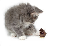 Kitten with christmas pinecone. Close-up Royalty Free Stock Images
