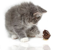 Kitten with christmas pinecone and reflect Stock Photos