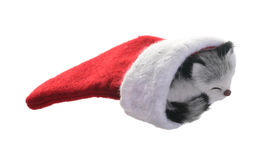 Kitten Christmas stocking. Christmas stocking with a gray kitten isolated on white background Royalty Free Stock Images