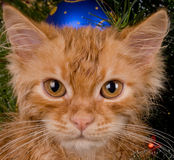 Kitten and christmas tree Stock Images