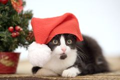 Kitten and christmas tree Royalty Free Stock Image