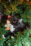 Kitten in Christmas Tree. Royalty Free Stock Images