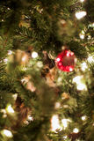 Kitten in a Christmas Tree Royalty Free Stock Images