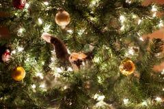 Kitten in a Christmas Tree Stock Photos