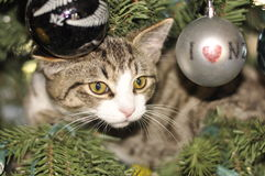 Kitten in a Christmas tree. Kitten surprise in a Christmas tree Royalty Free Stock Images