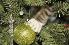 Kitten in a Christmas tree. Kitten surprise in a Christmas tree Stock Photography