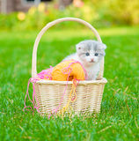 Kitten with clews of thread  in basket on green grass Royalty Free Stock Photography