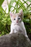 Kitten climbed up the tree Stock Image