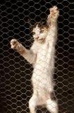Kitten climbing Royalty Free Stock Image