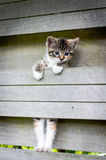 Kitten climbing of a fence. Sweet looking kitten climbing on a garden fence Royalty Free Stock Images