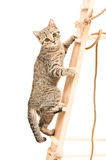 Kitten climbing the stairs Stock Photos
