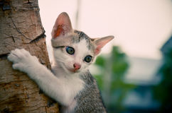 Kitten is climbing on tree. Stock Images