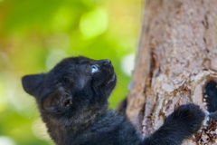 Kitten climbing on the tree Stock Image