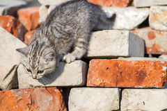 Kitten climbs bricks Stock Photo