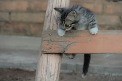 The kitten climbs up a ladder stock photo