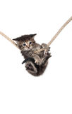 Kitten clinging to rope Stock Photography