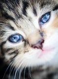 Kitten. Close up of a kitten Stock Image