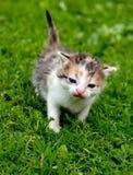 Kitten close up Royalty Free Stock Photos