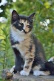 Kitten 9 Royalty Free Stock Images