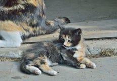 Kitten 3 Stock Photos