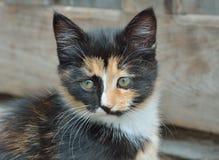 Kitten 12 Stock Image