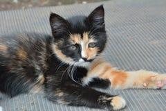 Kitten 11 Royalty Free Stock Image