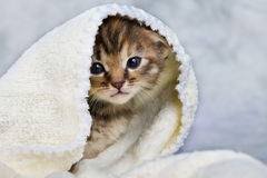 Kitten closed in towel Royalty Free Stock Photo