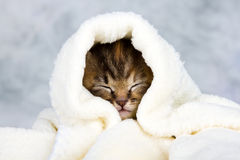 Kitten closed in towel Stock Images