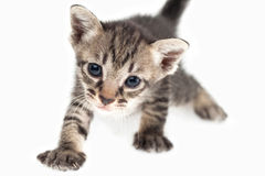 Kitten closed up Stock Image