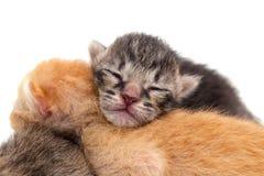 Kitten closeup isolated Stock Photography