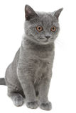 Kitten closeup isolated on a white background. vertical photo. Stock Image