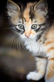 Kitten closeup outdoors.Small cat. Royalty Free Stock Photos